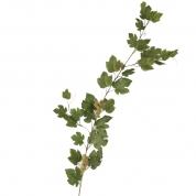 Vinblads Ranke Grøn