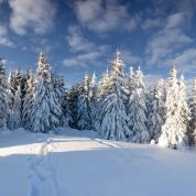 Banner - Vinter dag med træer 7,5x3m