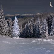 Banner - Vinter aften, træer og sne 4,5x3m