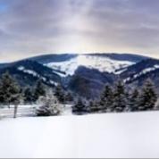 Banner - Vinter - Alper, træer, sne 11x2,5m