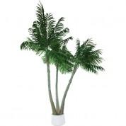 Palmetræ 2,5 meter - Palme med 3 stammer