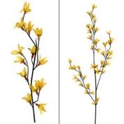 Forsythia gren , Med 3 kviste