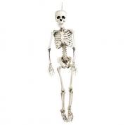 Skelet - 150 cm.