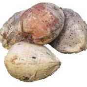 Kokosnød med skal