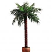 Palmetræ 1,90 meter