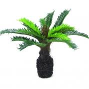 Palmetræ 0,50 meter