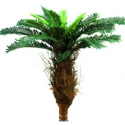 Palmetræ 0,90 meter