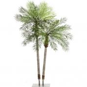 Palmetræ 2,20 + 2,60 meter - Phoenix