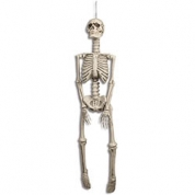 Skelet - 92 cm.