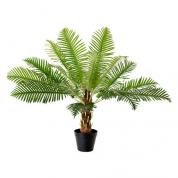 Palmetræ 0,70 meter