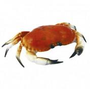 Krabbe (Lille)