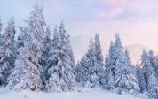Banner - Vinter dag tæt på træer 4x2,5m